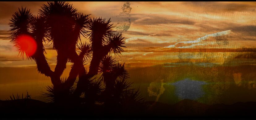 A video showing a Palm Springs desert landscape.
