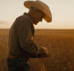 Bob Quinn walking through a field of wheat.